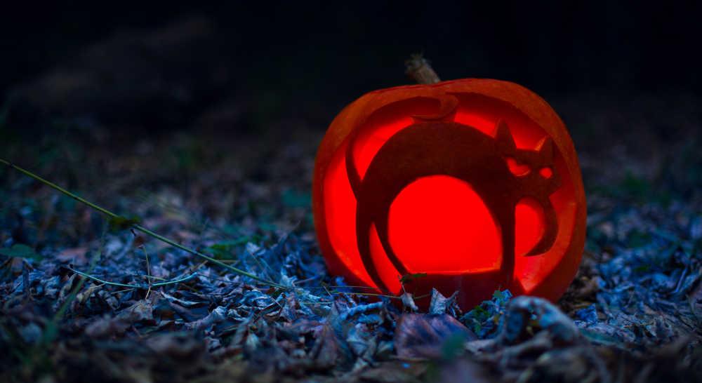 cat halloween jack o lantern